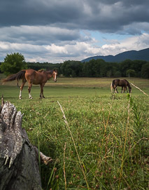local landscape with horses